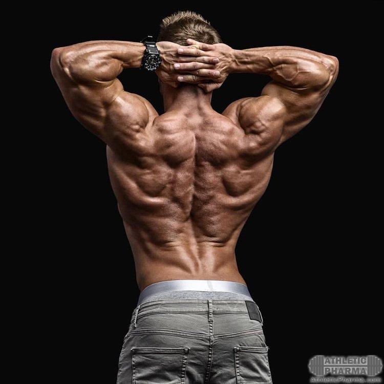 Мышцы спины у бодибилдера